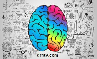 بخش های دو نیمکره مغز